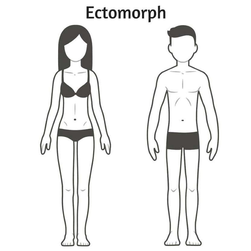 Características dos ectomorfos